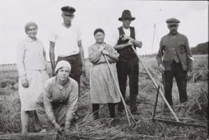 Getreideernte bei Blomens in den 30er Jahren